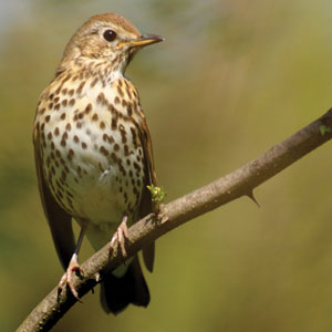 Hearing lets us hear birdsong that improves physical wellbeing